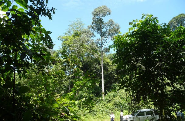 P1060477 C1 Planted Tree