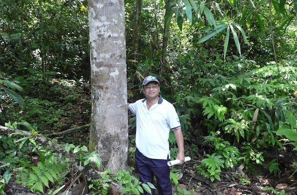 P1060479 C1 Planted Tree